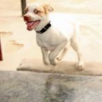 Perro hiperactivo, porqué y qué hacer
