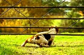 imagen perro escapista