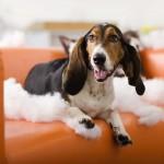 ¿Tu perro rompe todo?