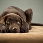 ¿Está tu perro aburrido?