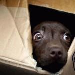 ¿Tiene tu perro fobia a los ruidos?