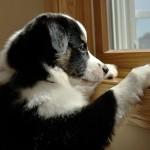Mi perro tiene ansiedad por separación