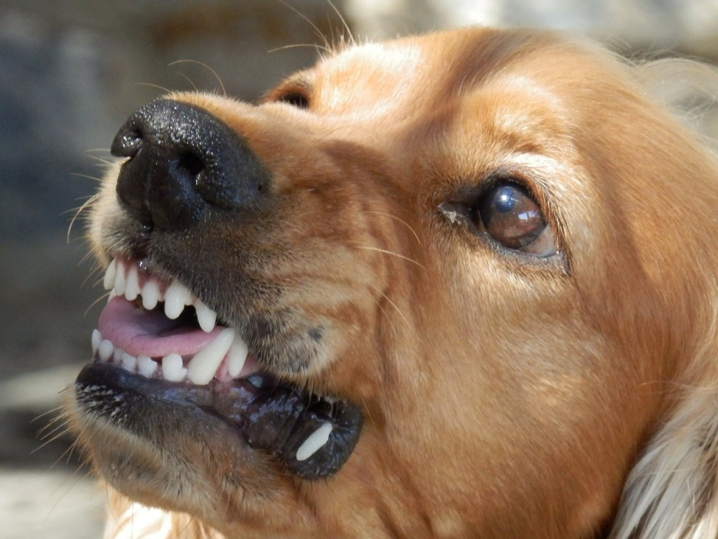foto perros terapias de modificacion de conductas