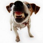 Problemas de agresividad en el perro. Causas y pautas a seguir