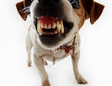 agresividad en el perro