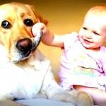 Perros y la llegada del nuevo bebé