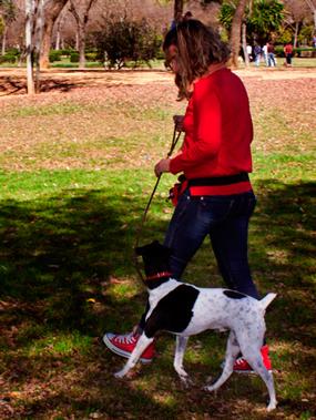 educación y psicología canina