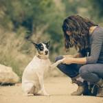 ¿Estás pensando en adquirir un perro?