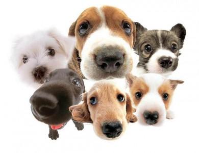 foto comportamiento perros