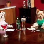 La humanización de los perros