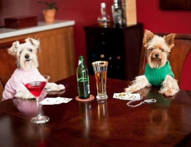 imagen perros humanizados