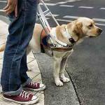 imagen perro guia