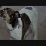 Chicho, el perro actor