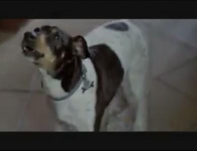 imagen perro actor