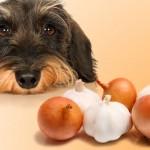 Alimentos tóxicos para nuestros perros