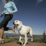 Ponte en forma con tu perro
