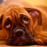 5 síntomas para saber si tu perro tiene depresión