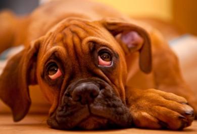 imagen perro con depresión