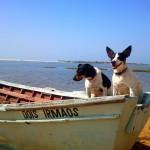 Enseña a tu perro a disfrutar del agua