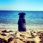 7 claves para saber si tu perro es feliz