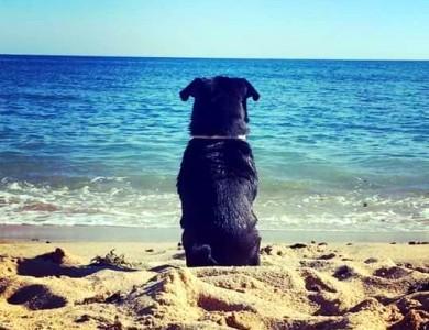 imagen perro feliz en una playa