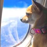 ¿Sabías que puedes viajar en avión con tu mascota? averigua cómo.
