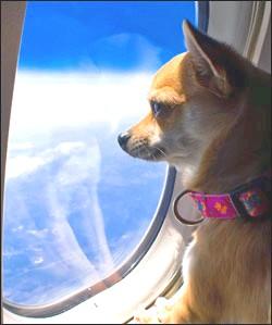 viajar en avión con tu perro
