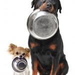 ¿Tu perro come mal? 7 sencillos pasos para solucionarlo