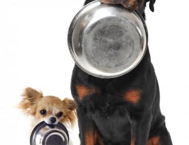 ¿tu perro come mal?