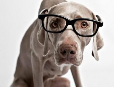 perro verdadero o falso