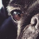 Los perros no ven en blanco y negro ¿Sabes cómo ven?