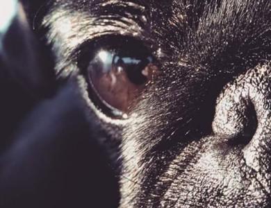 imagen de los perros no ven en b/n