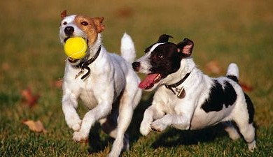 Sencillas pautas para socializar a tu cachorro