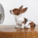 7 trucos para evitar que a tu perro le de un golpe de calor