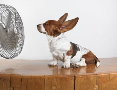 7 trucos para evitar golpe de calor de tu mascota