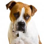 7 falsos mitos sobre el perro que te sorprenderá descubrir