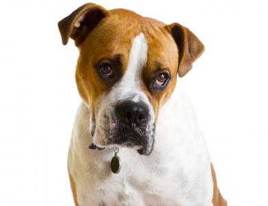 falsos mitos perros