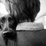 4 síntomas para detectar la ansiedad por separación en tu perro