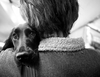 sintomas de la ansiedad por separacion en tu perro