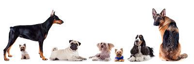 falsos mitos sobre perros