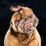 5 razones por las que tu perro se sacude. Sorpréndete