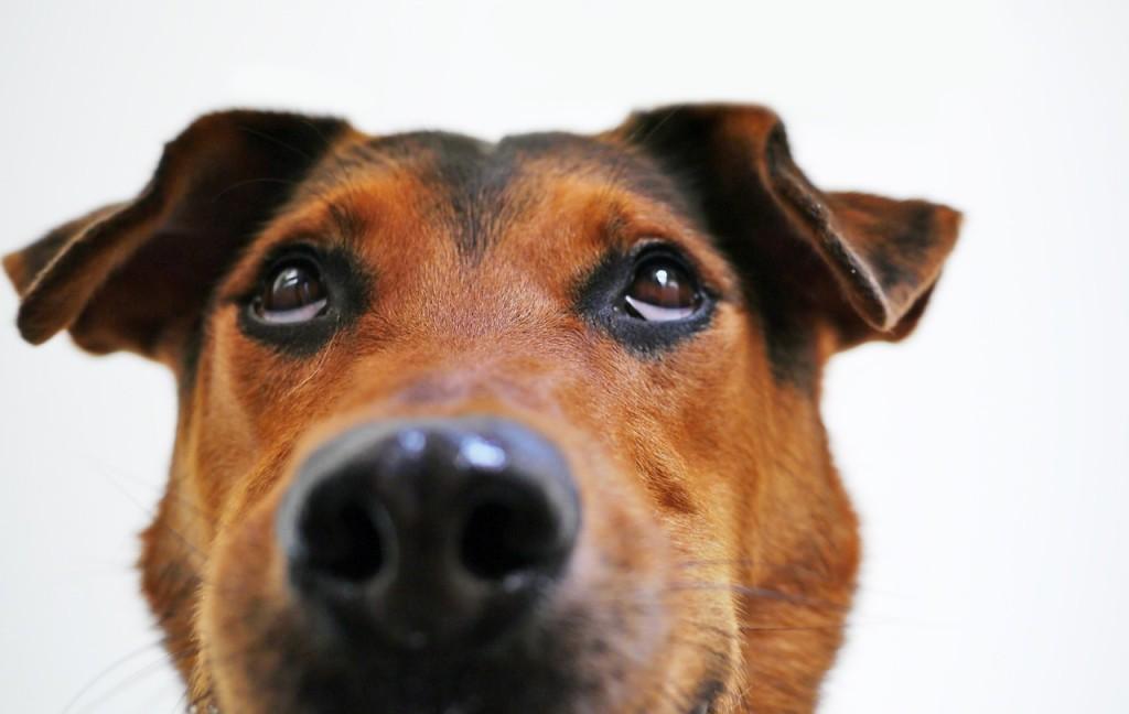perro confundido