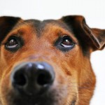 Situaciones que confunden a tu perro. Te sorprenderá.