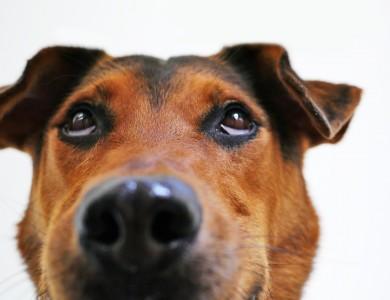 Situaciones que confunden a tu perro
