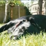 3 motivos por los que tu perro toma el sol. Descúbrelos