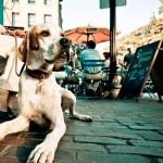 Enseña a tu perro a comportarse en bares y terrazas con 3 simples pasos