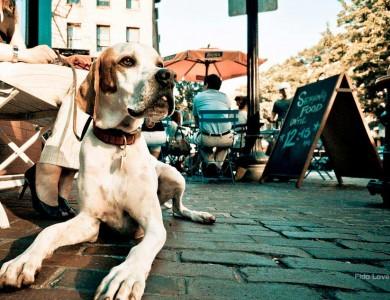 Aprende a llevar a tu perro a bares y terrazas