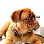 ¿Alzheimer en perros? Éstos son los síntomas