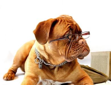 Alzheimer en perros