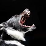 ¿Es la castración la solución a todos los problemas de agresividad por dominancia?